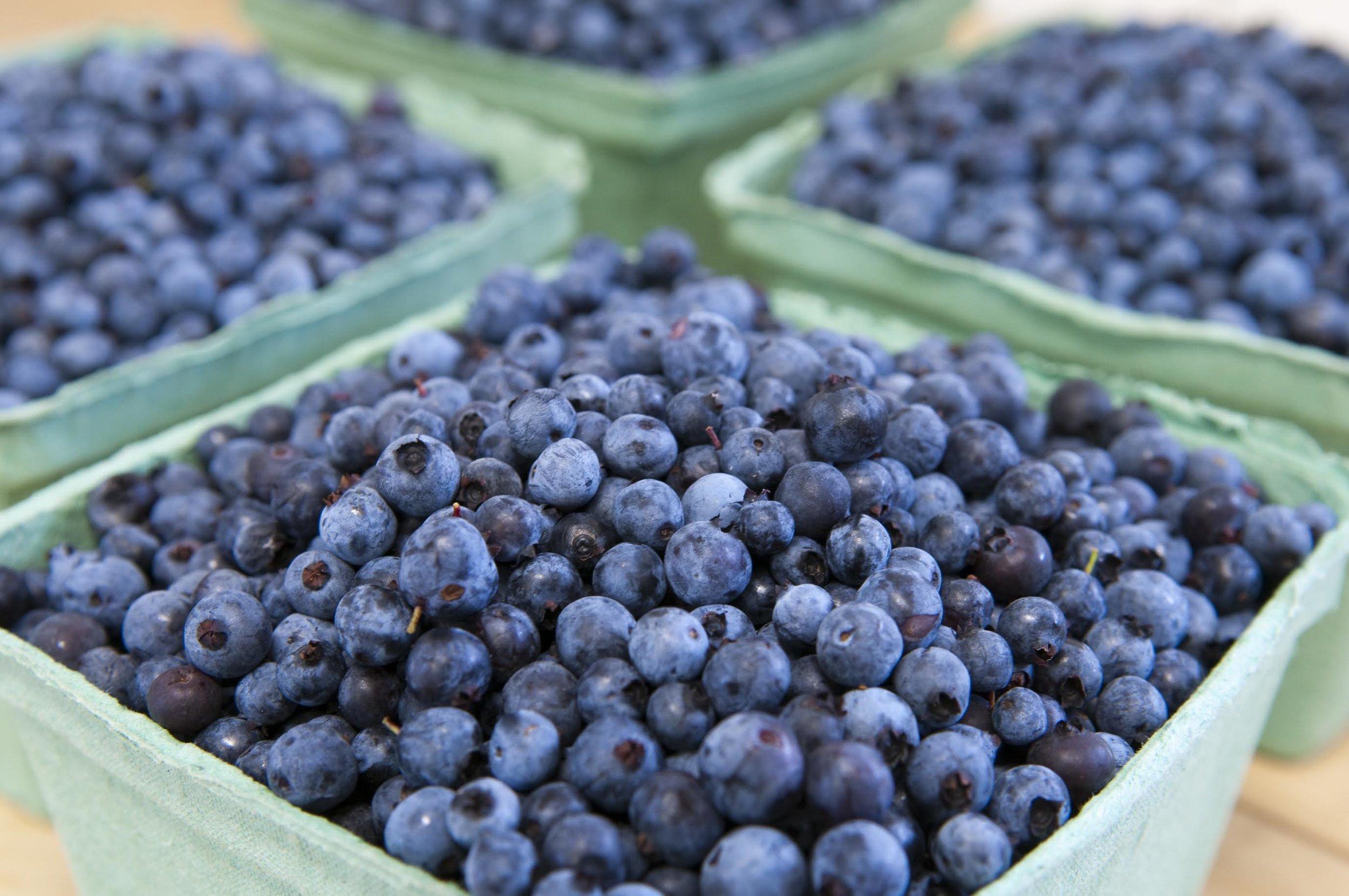 wild-maine-blue.0.jpg