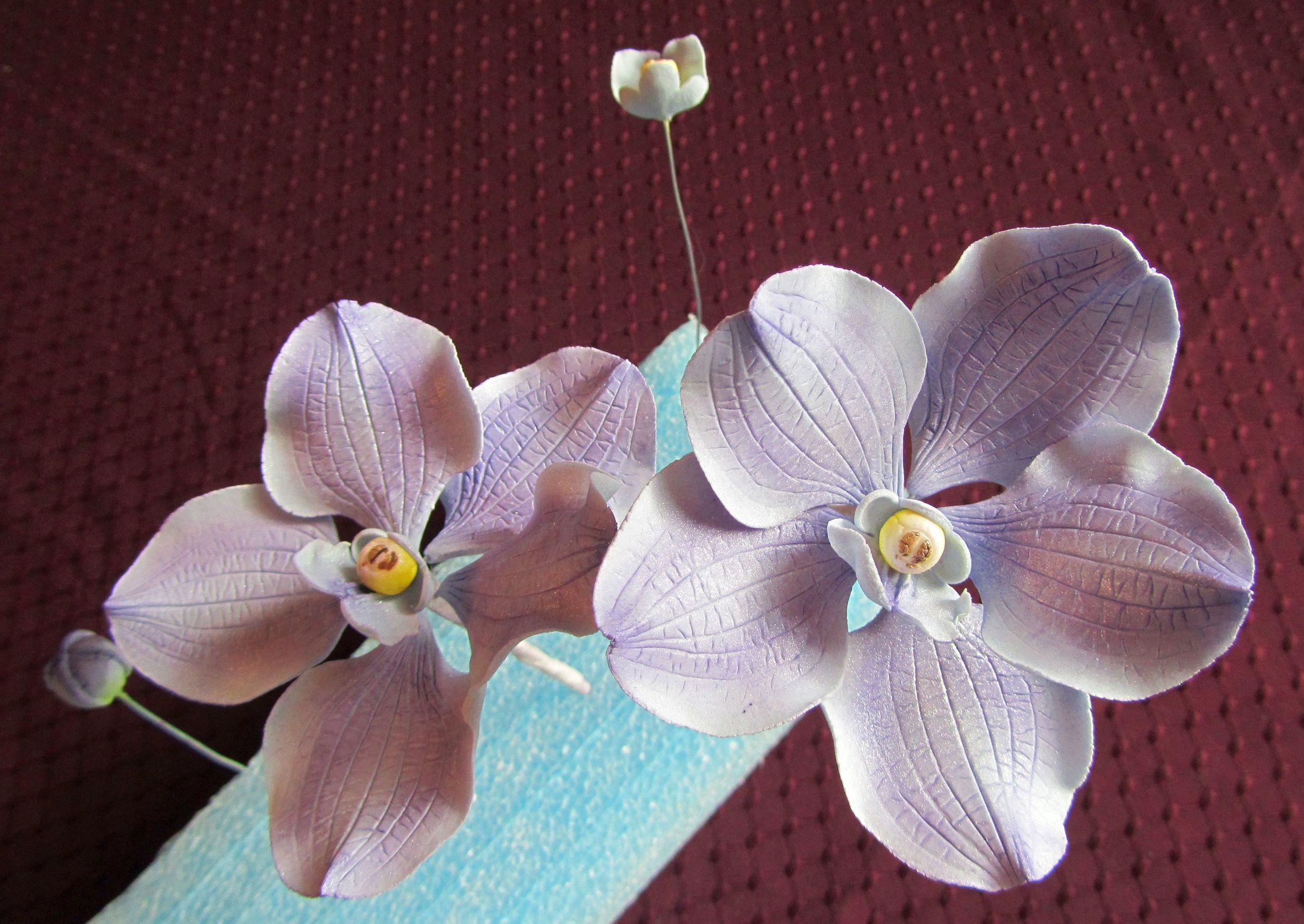 Sugar Vanda Orchids in pale lavender. Image © Carla Schier.