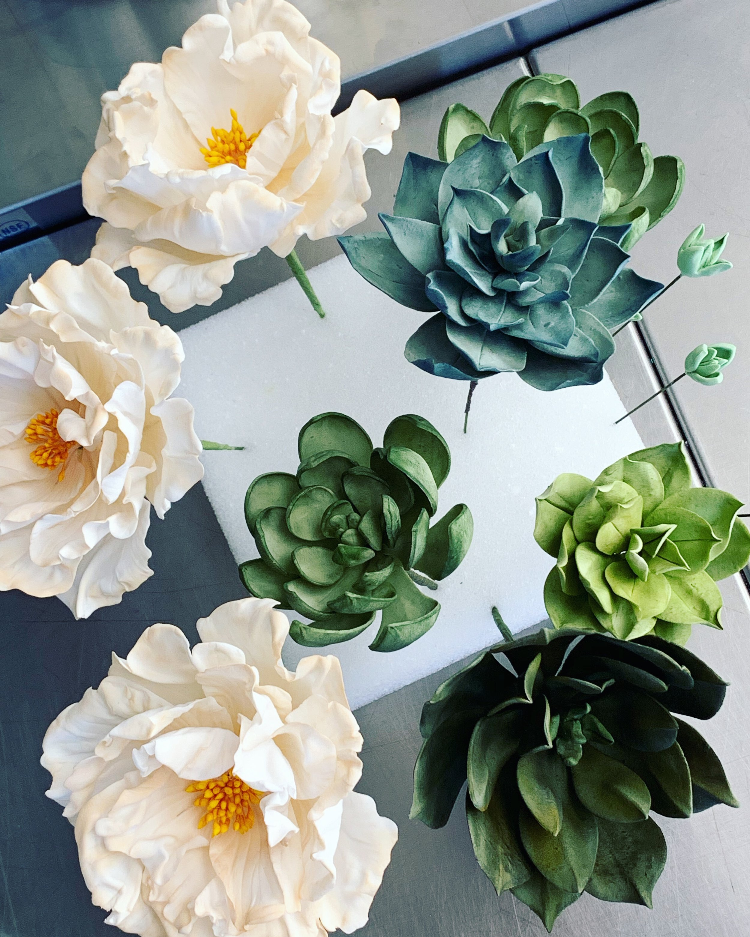 Sugar succulents and climbing roses. Image copyright Carla Schier.