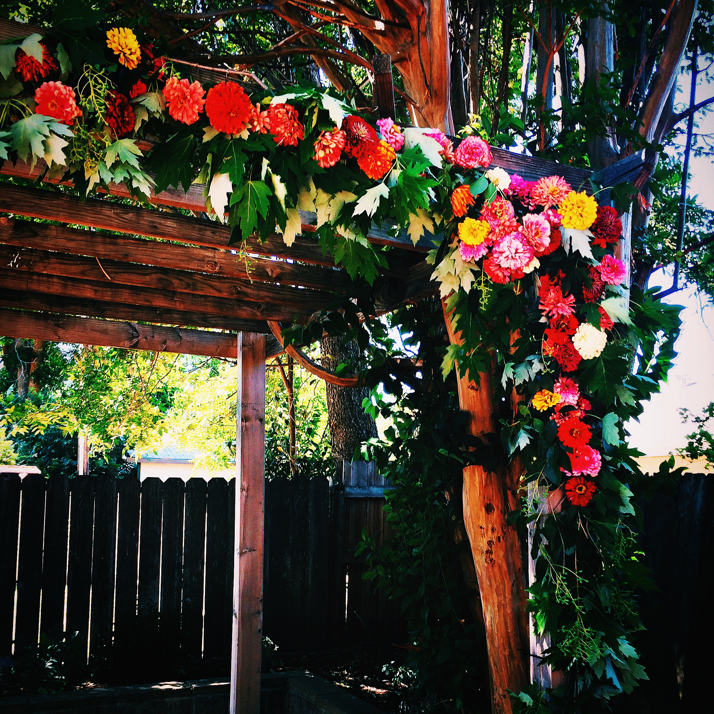 And then there was this bright backyard arch...