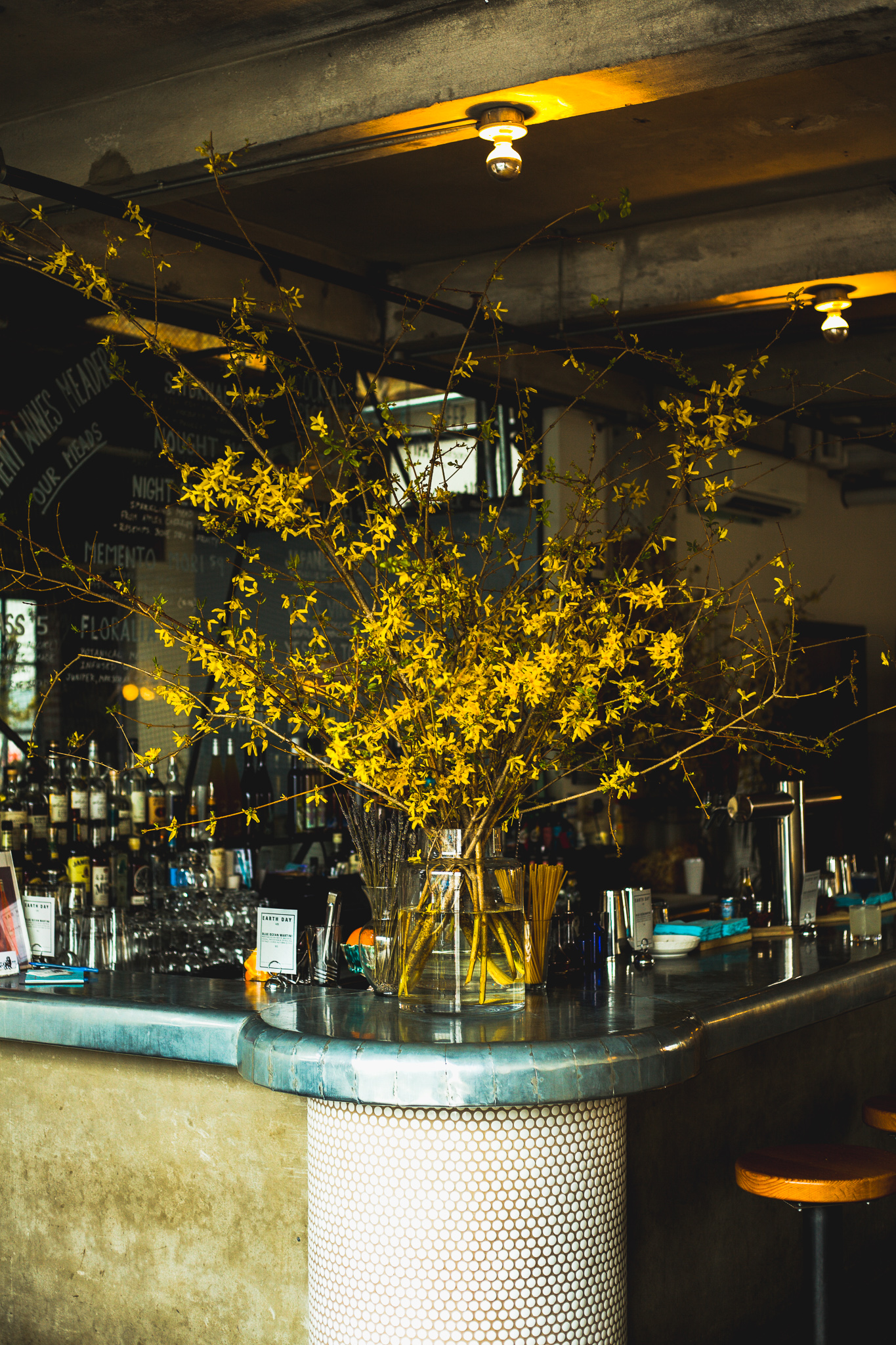 4.20.19 Honey's , Brooklyn, New York  Forsythia and Wild Daffodils