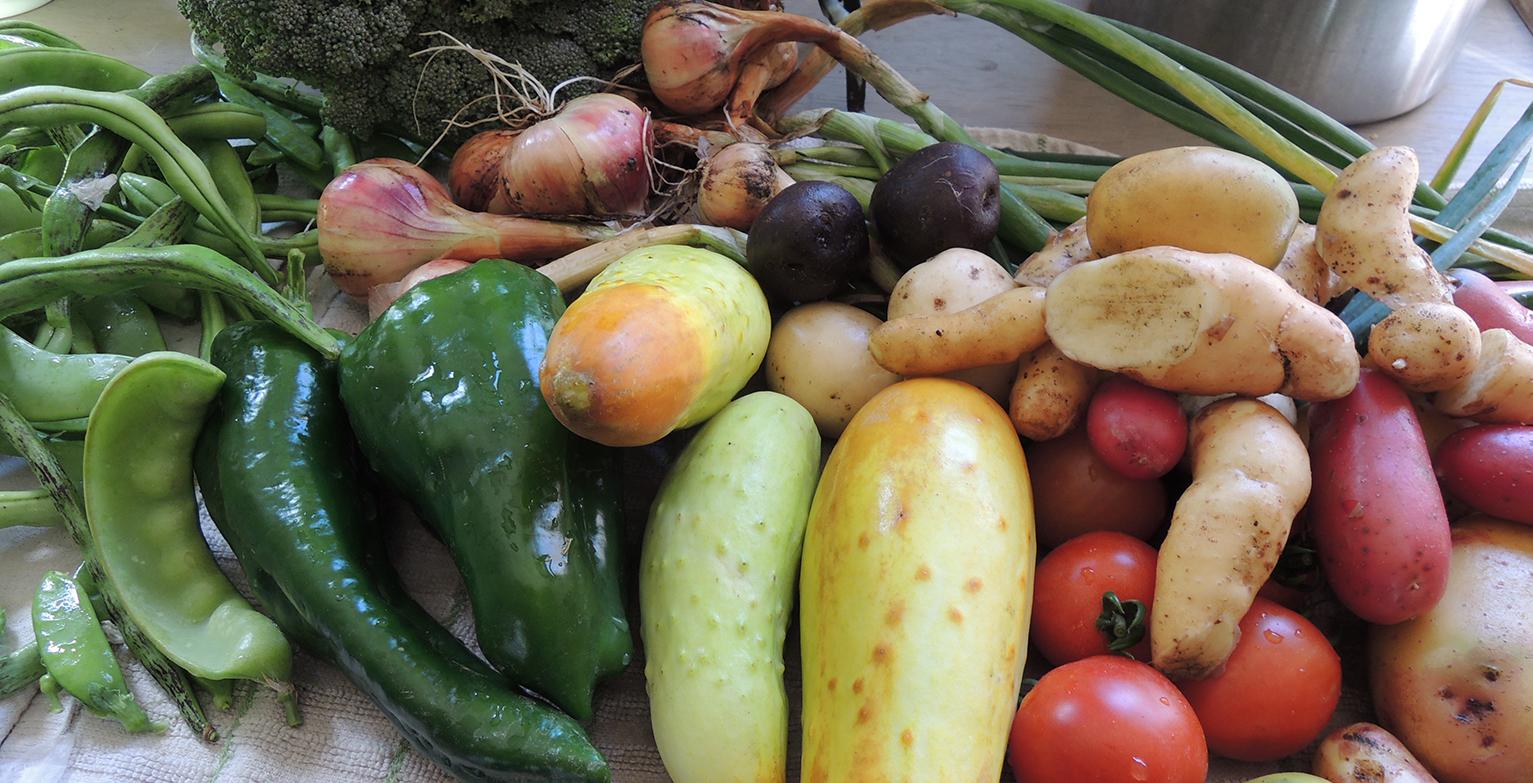 harvest2015.jpeg