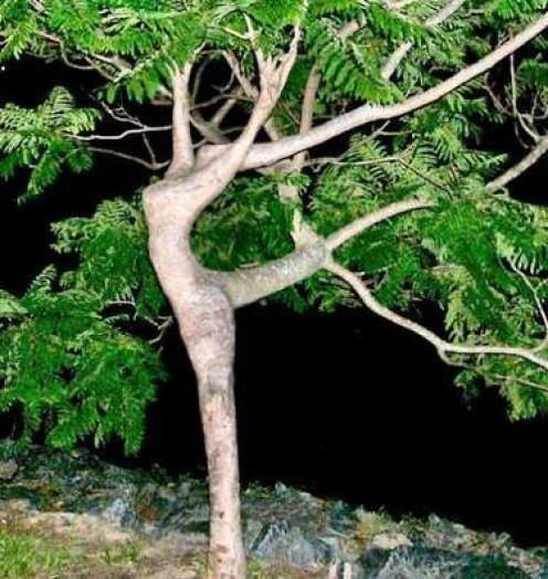 increditble tree.jpg