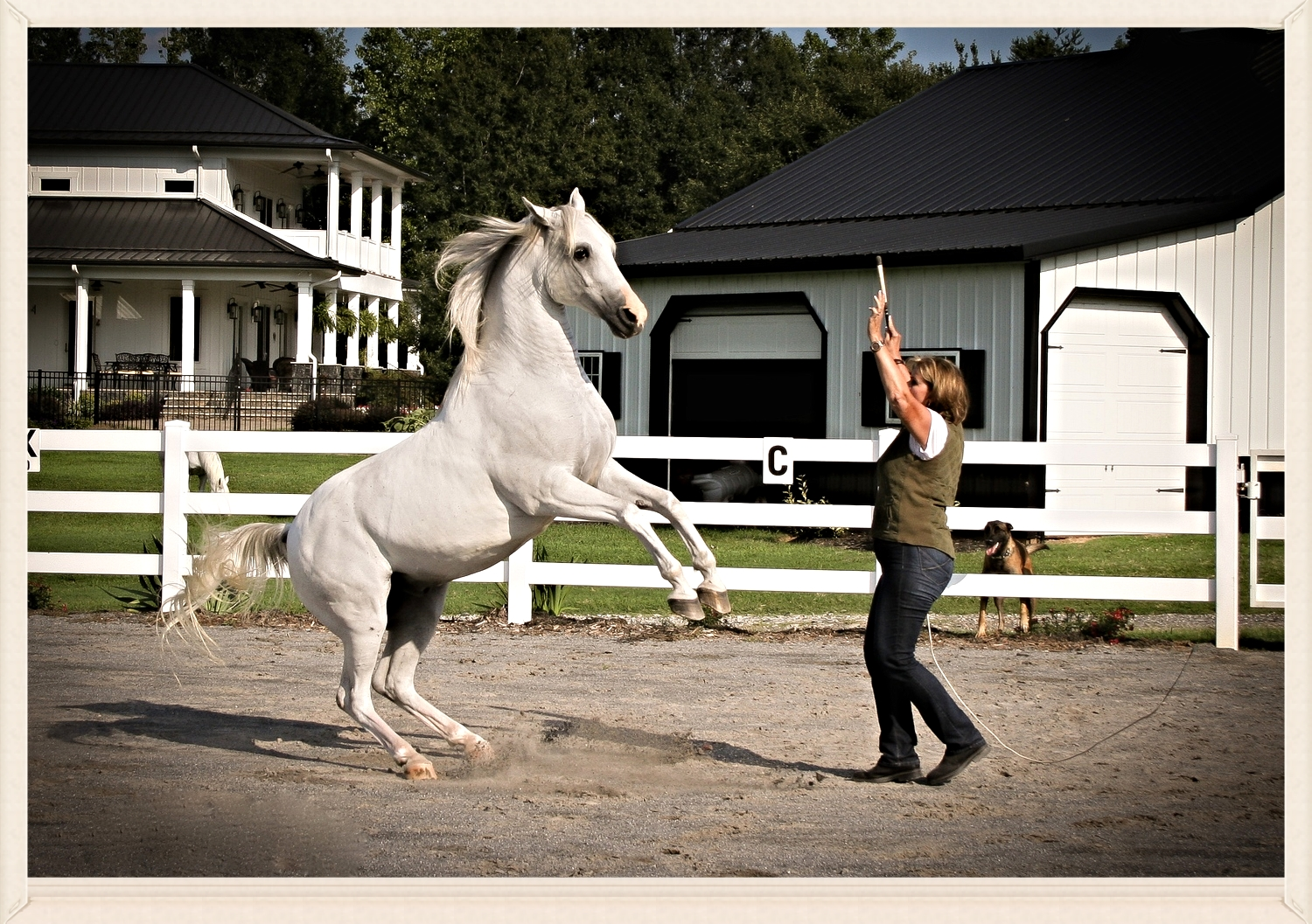 Once you have the connection, your horse will preform from the bond he shares with you vs. your training.