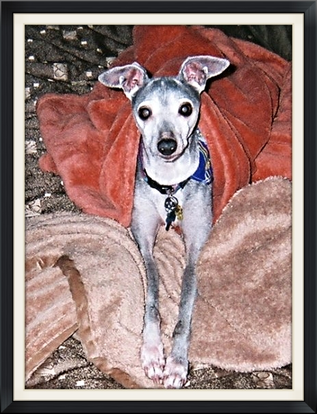 Beau, Pam Johnston's most devoted companion of 14 + years.