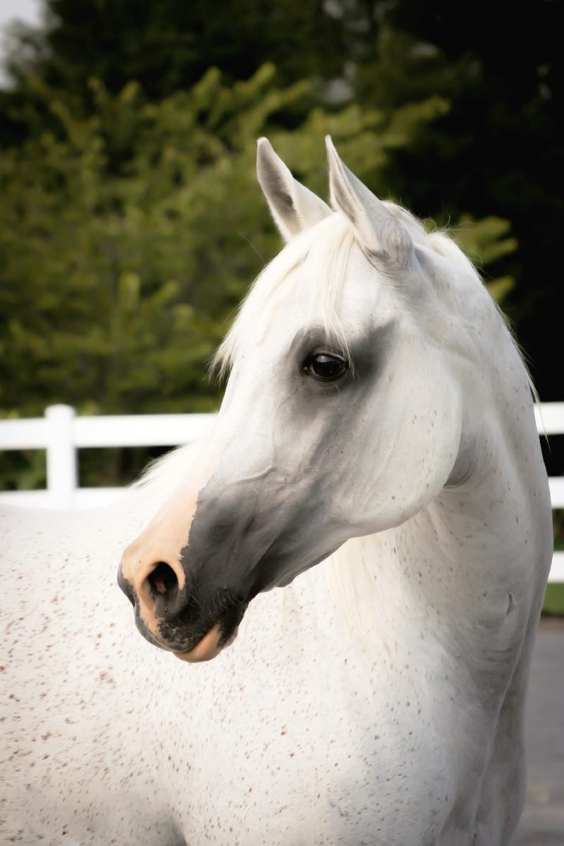 My beautiful horse Gramsey