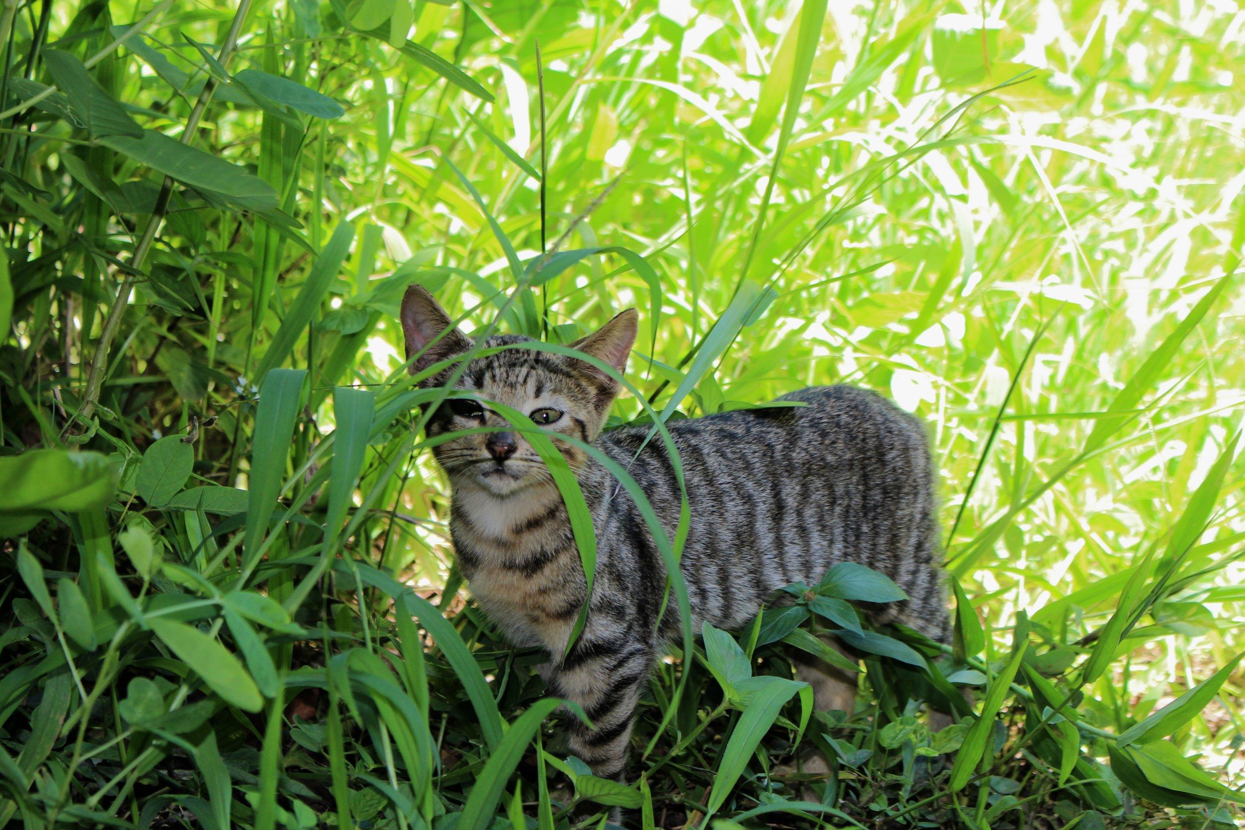Stripe, the cat.