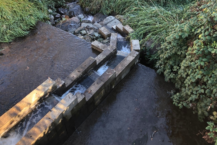 Flowing, opening up water to salmonids they haven't had access to for 50 years