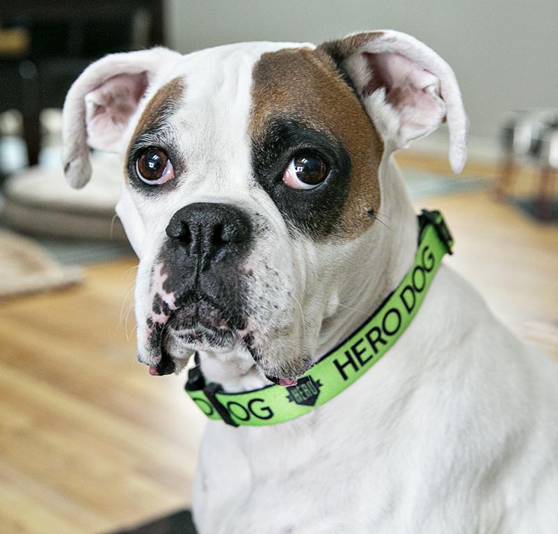 Roxy - a deaf HERO dog and amazing sidekick