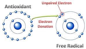 Antioxidants replace the stolen electron