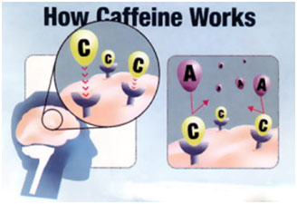 Restful Adenosine getting rejected as Caffeine takes it's spot in the cell receptor. The brain gets a false signal that all is well and there's no need to rest - while the cell keeps filling with toxins.