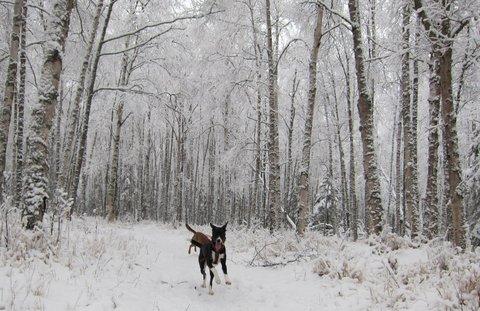 yipppeeee for snow.JPG