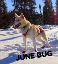 Junebugcropped.jpg