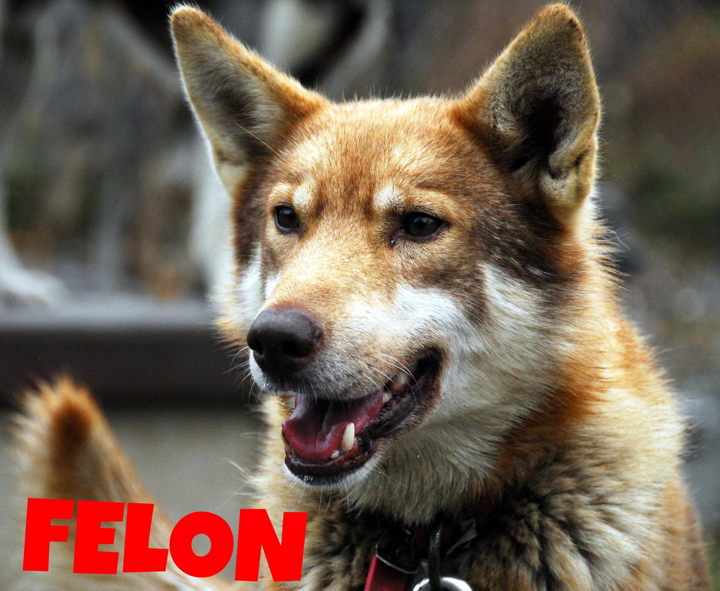 Felon.JPG