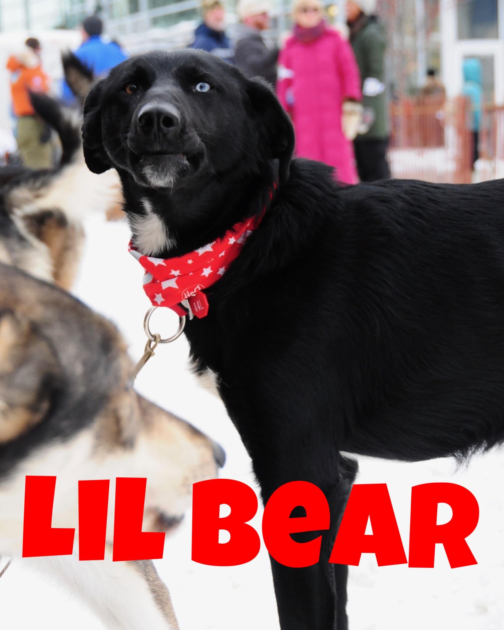 Lil Bear.JPG