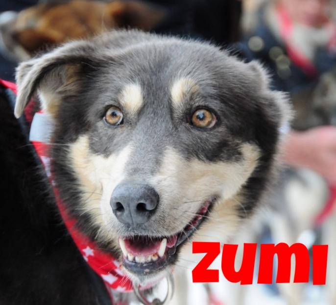 Zumi - use.jpg