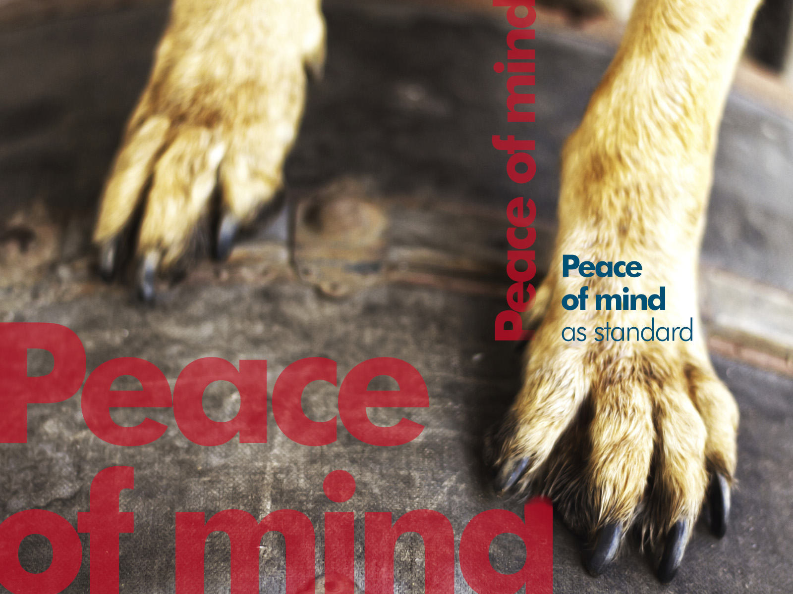 PCKC-Dog-PeaceofMind.jpg