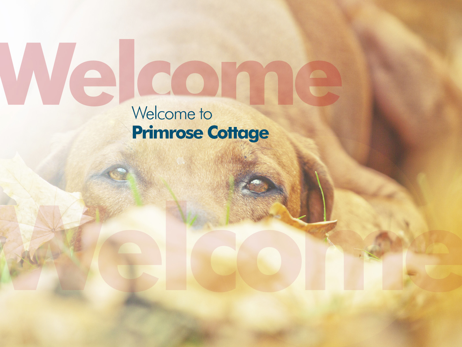 PCKC-Dog-Welcome.jpg