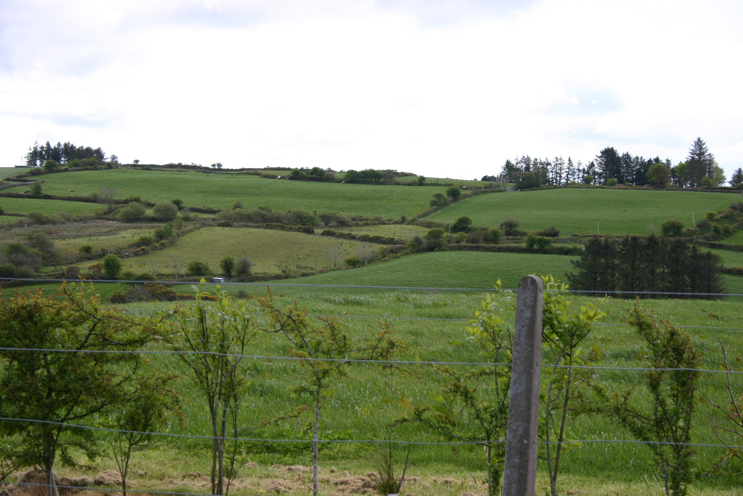 green pastures.jpg