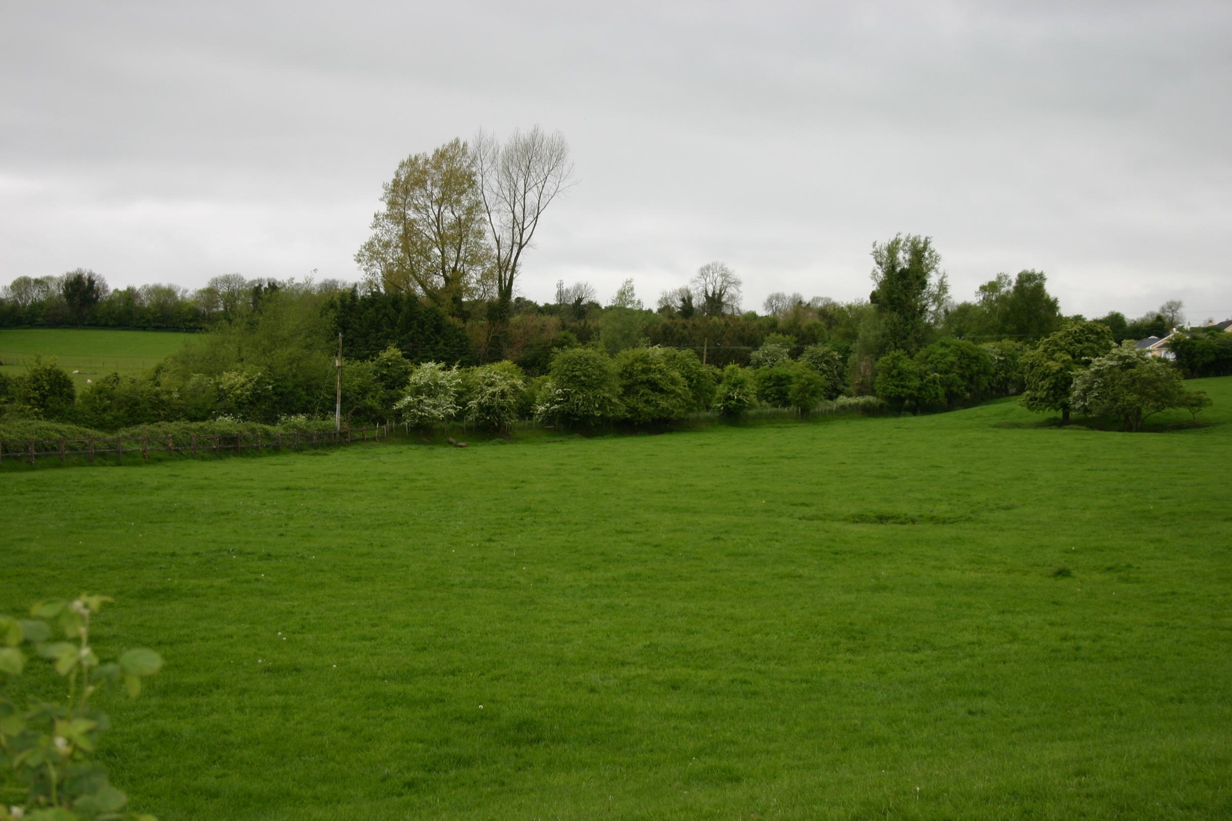 kildare green.jpg