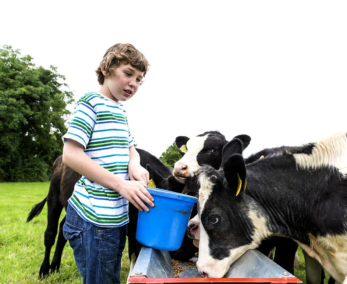 david cows.jpg