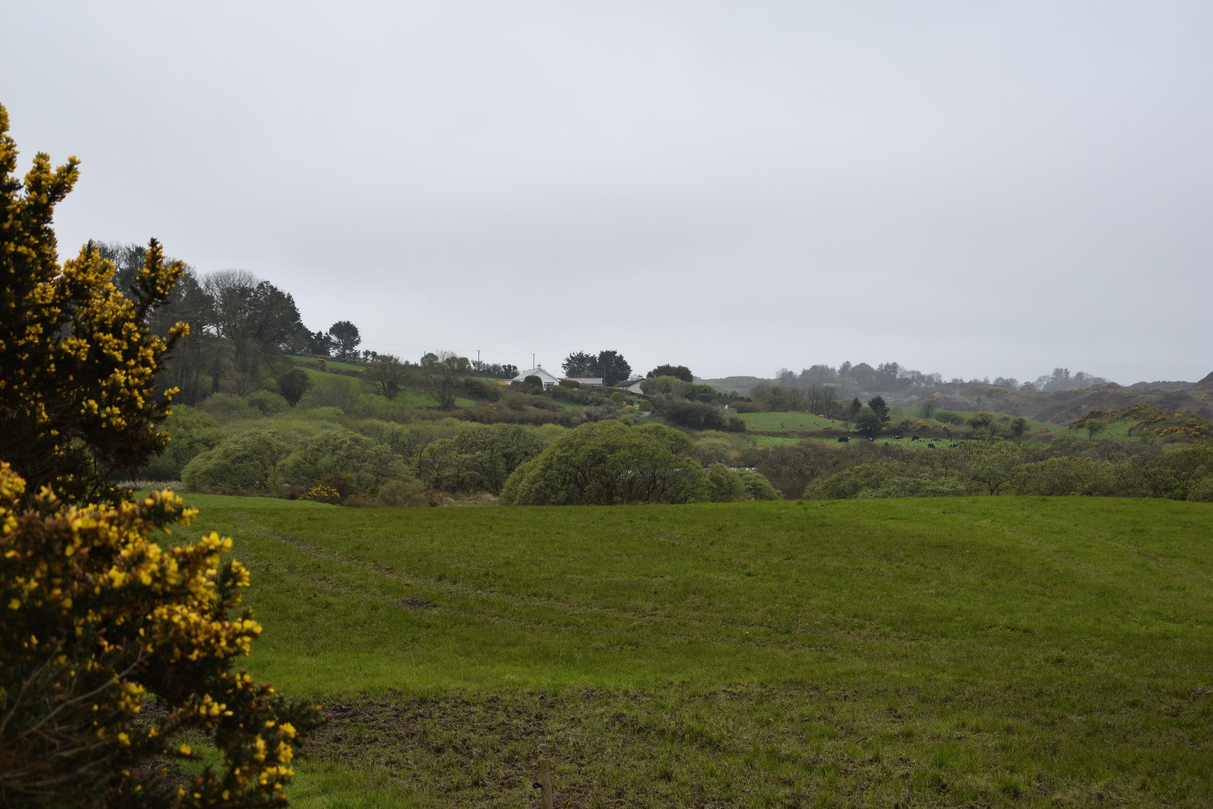 cork countryside.jpg