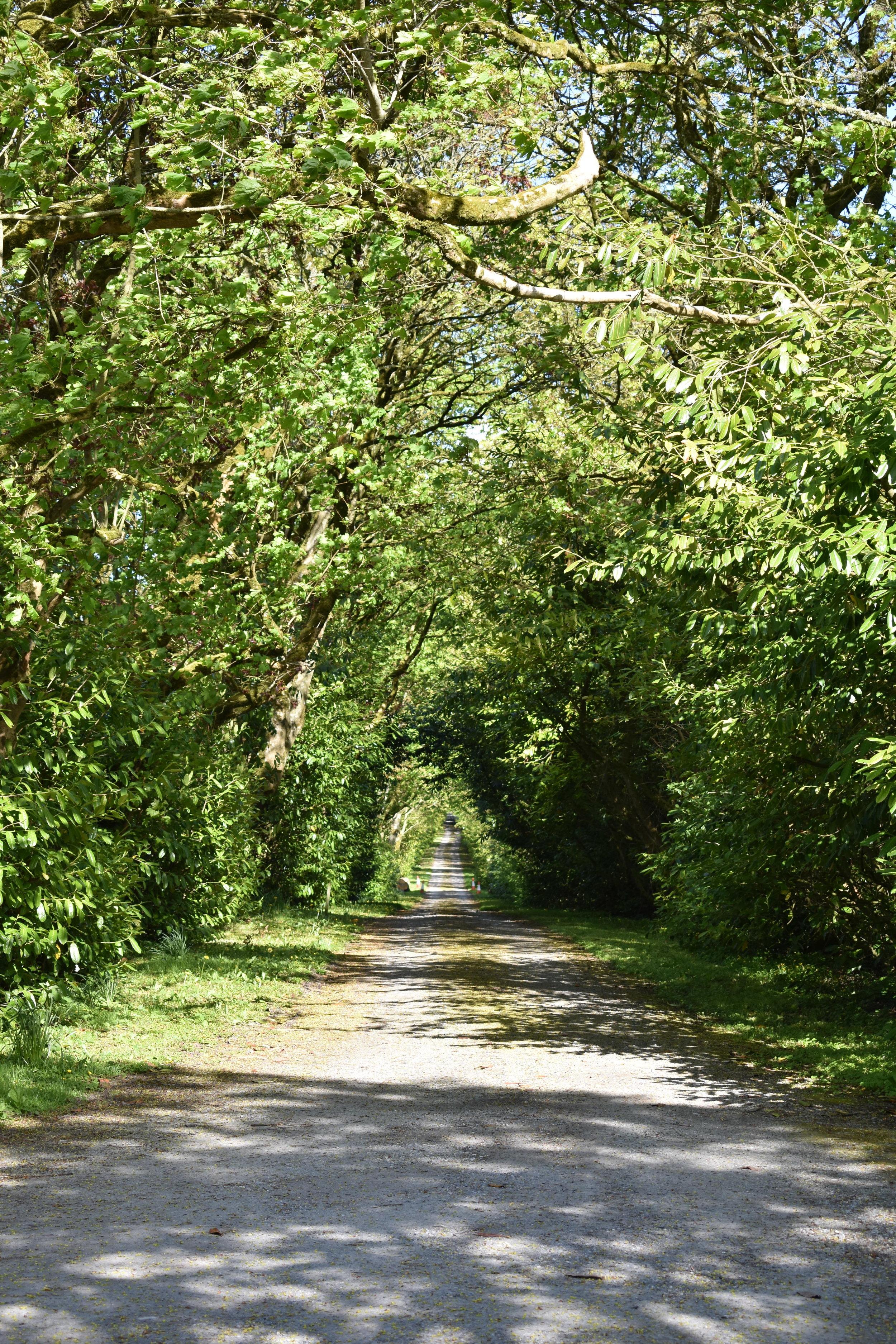 Tree Tunnel.jpg