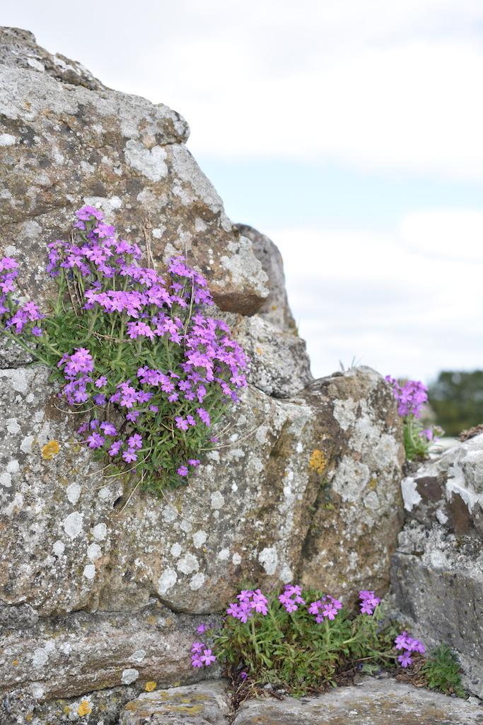growing rocks copy.jpg