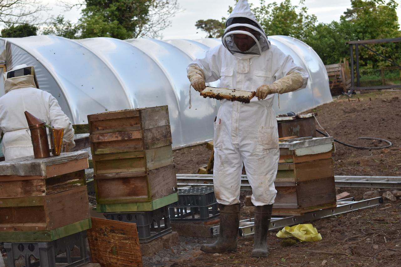 Bee keeping 2 copy.jpg