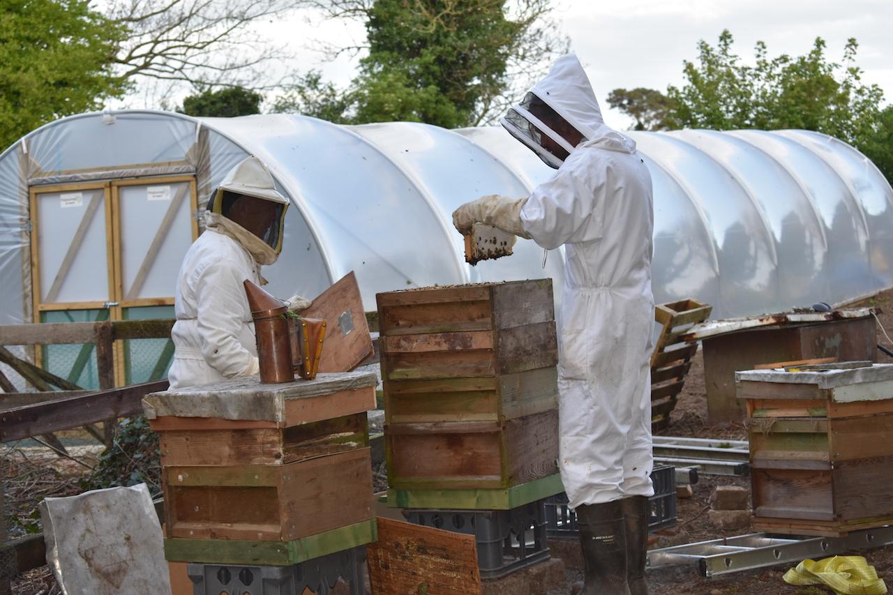 Bee keeping copy.jpg