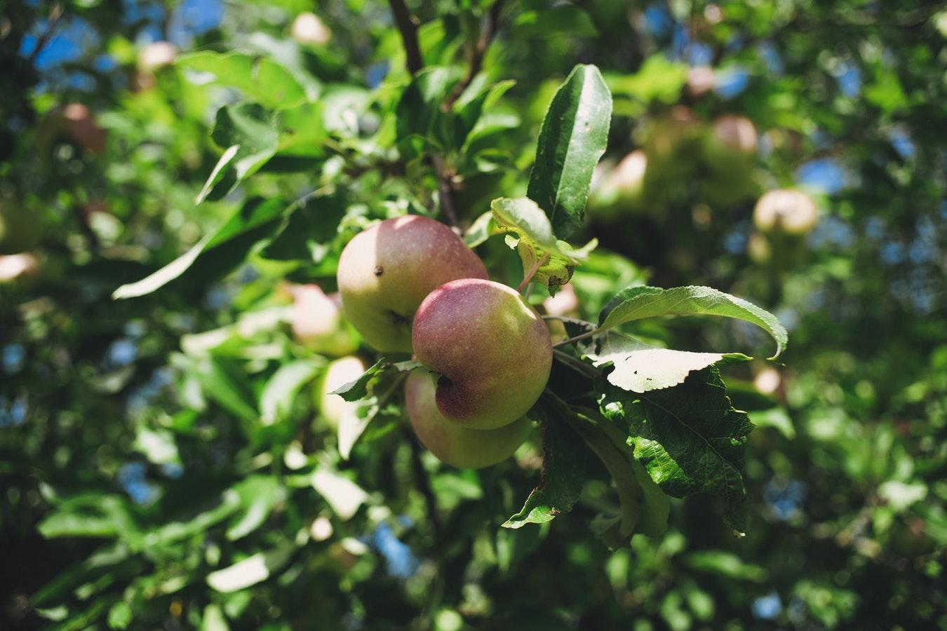Laaghangend fruit en vergezichten - Het ontwikkelen van een korte en lange termijn visie