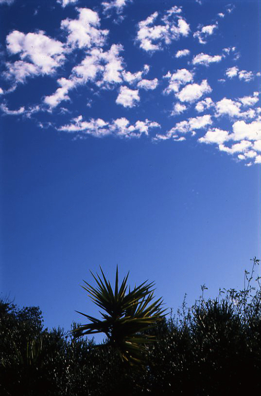 Clouds & Cactus Portugal.