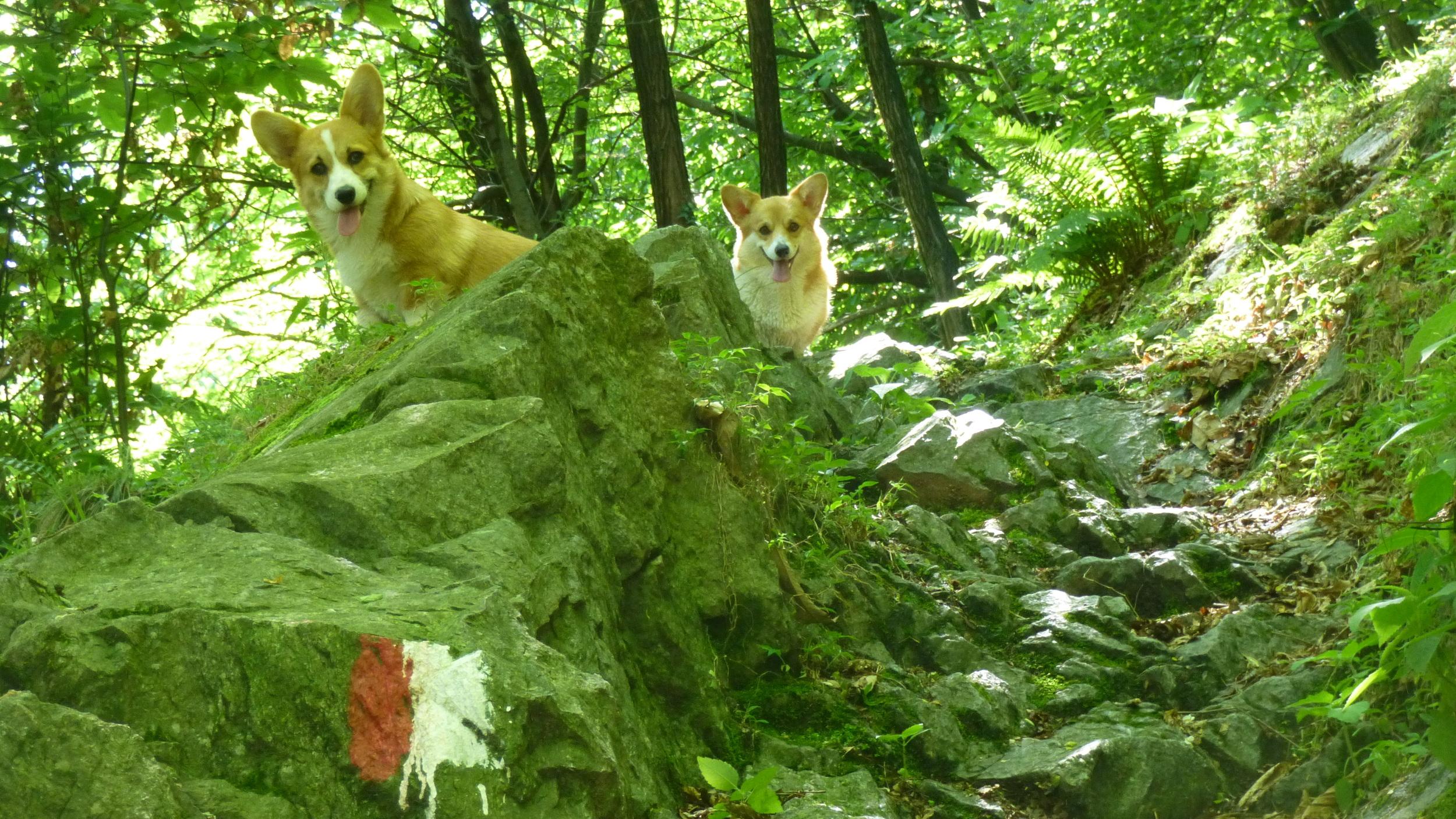 we'rebackwoods.jpg