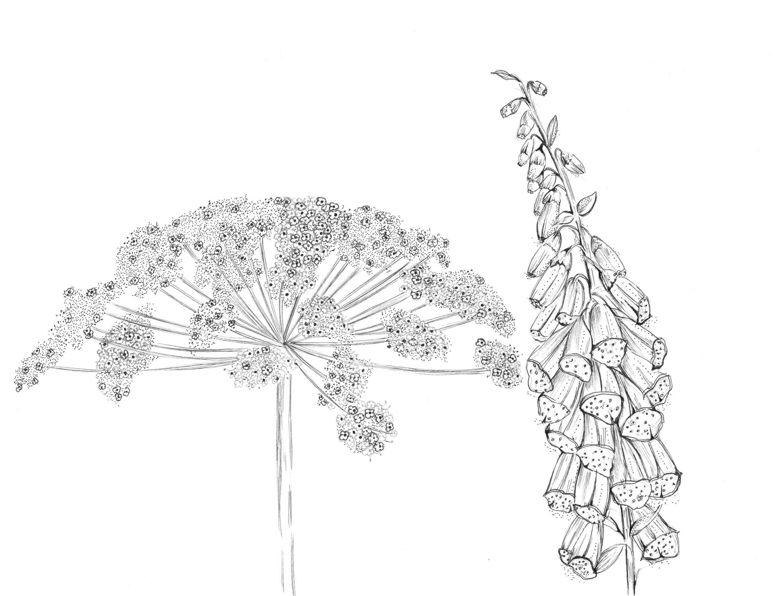 drawings f.jpg