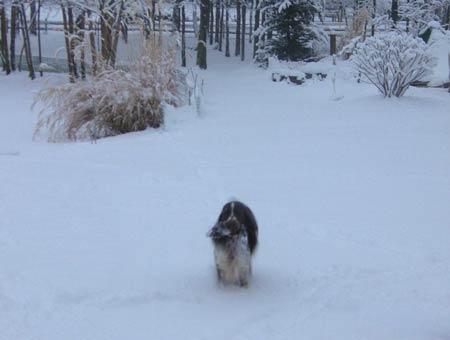Cooper-winter08-3.jpg