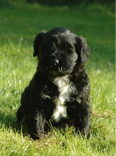 Coco puppy.jpg