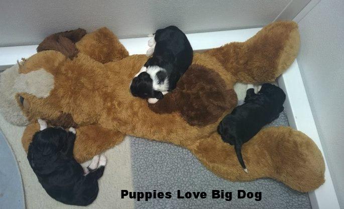 Big Dog and pups.jpg