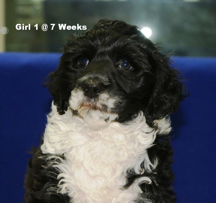 Girl 1 head 7 weeks.JPG