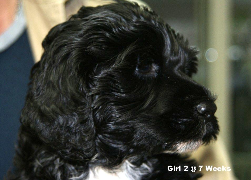 girl 2 head2 7 weeks.JPG
