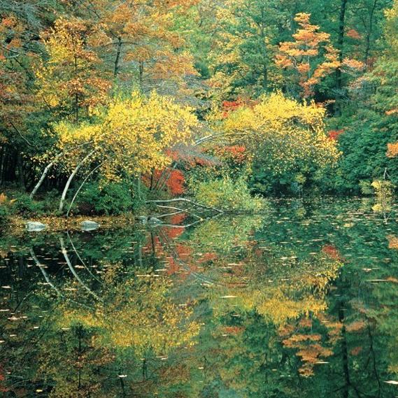 Lost-Pond-at-ManitogasqWeb.jpg