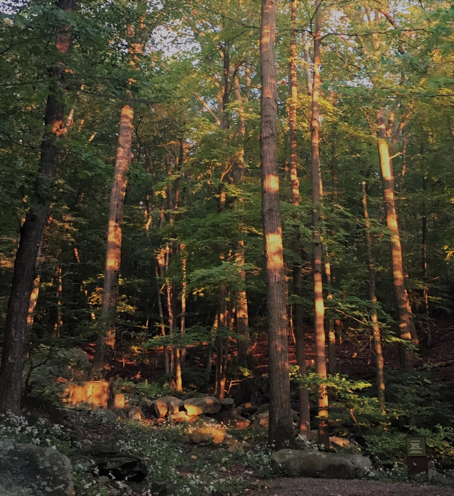 Copy of Sunset Reflected in Manitoga's Woodland Garden