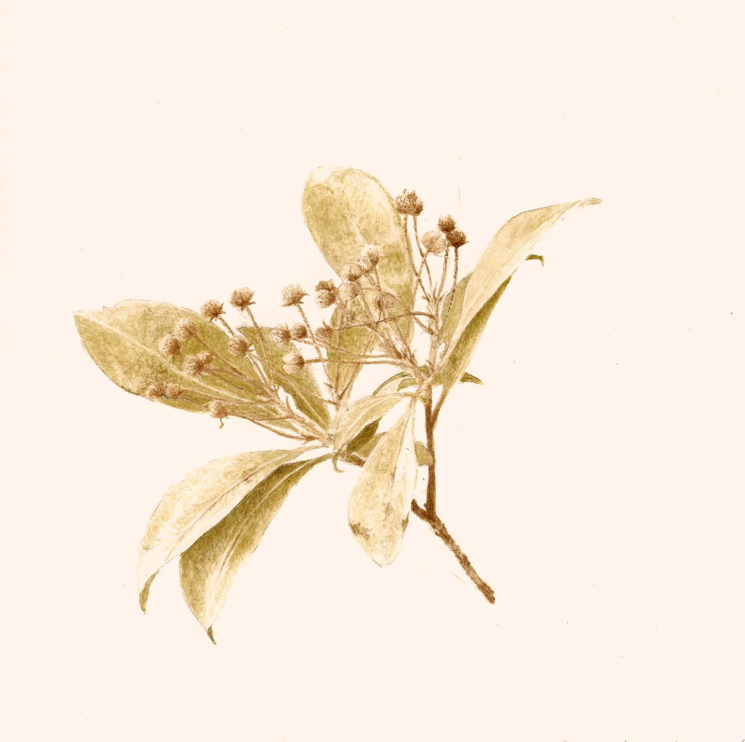 KAZUMI 3 crop.jpg