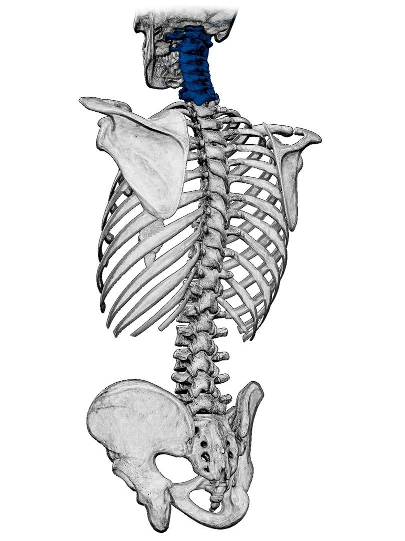 Spine-cervical.jpg