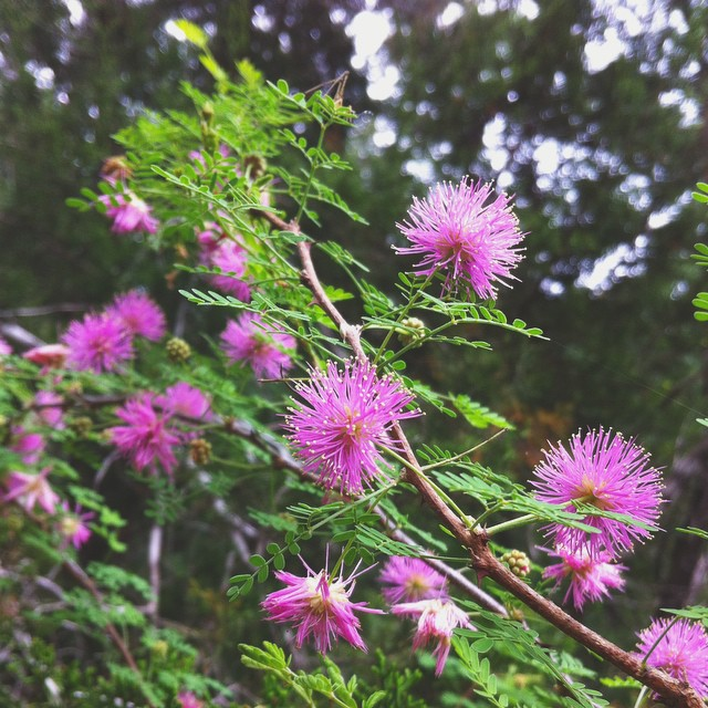 Trail finds. #flower #trail #atx