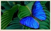 blue-colorful-butterfly-nature-hd-wallpaper-1600x1200-sharethesepicturesblogspotcom.jpg