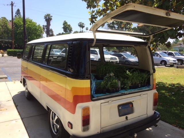 garden - VW harvest 1.JPG