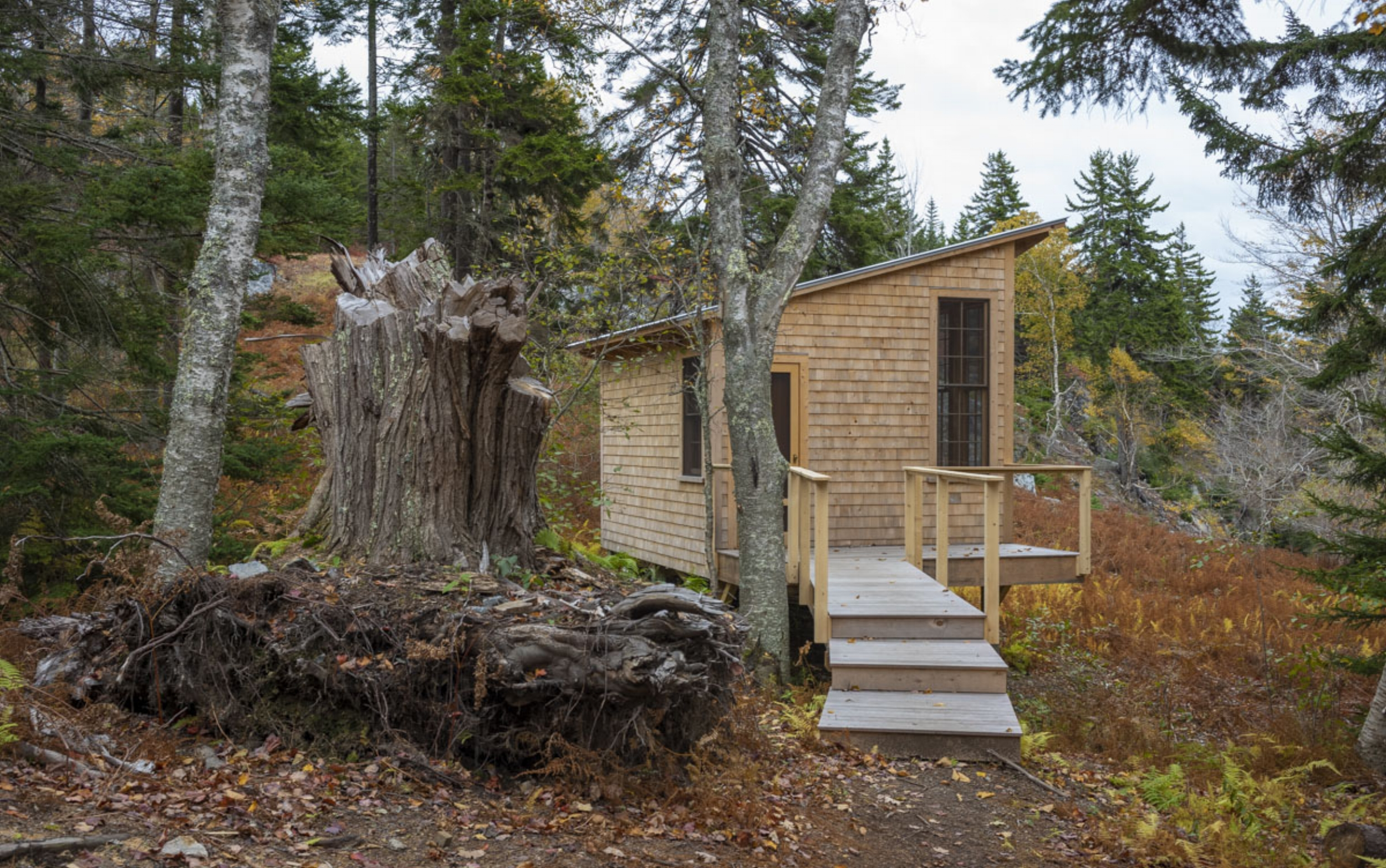 phopro-ext-cove_cabin_large_stump-150ppi8x5.jpg