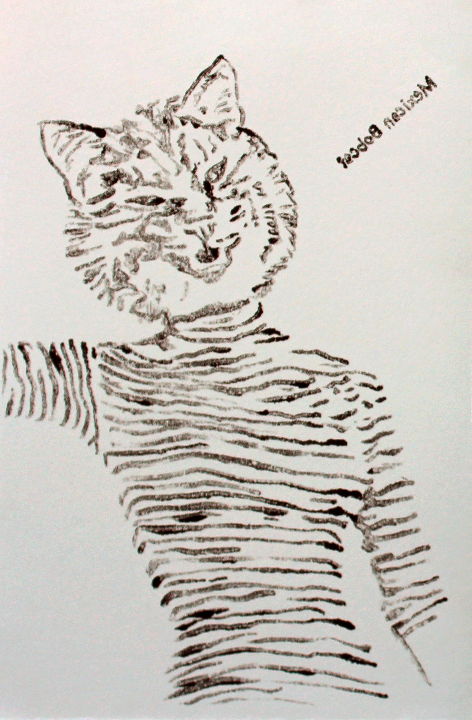 Mexican Bobcat (Study)