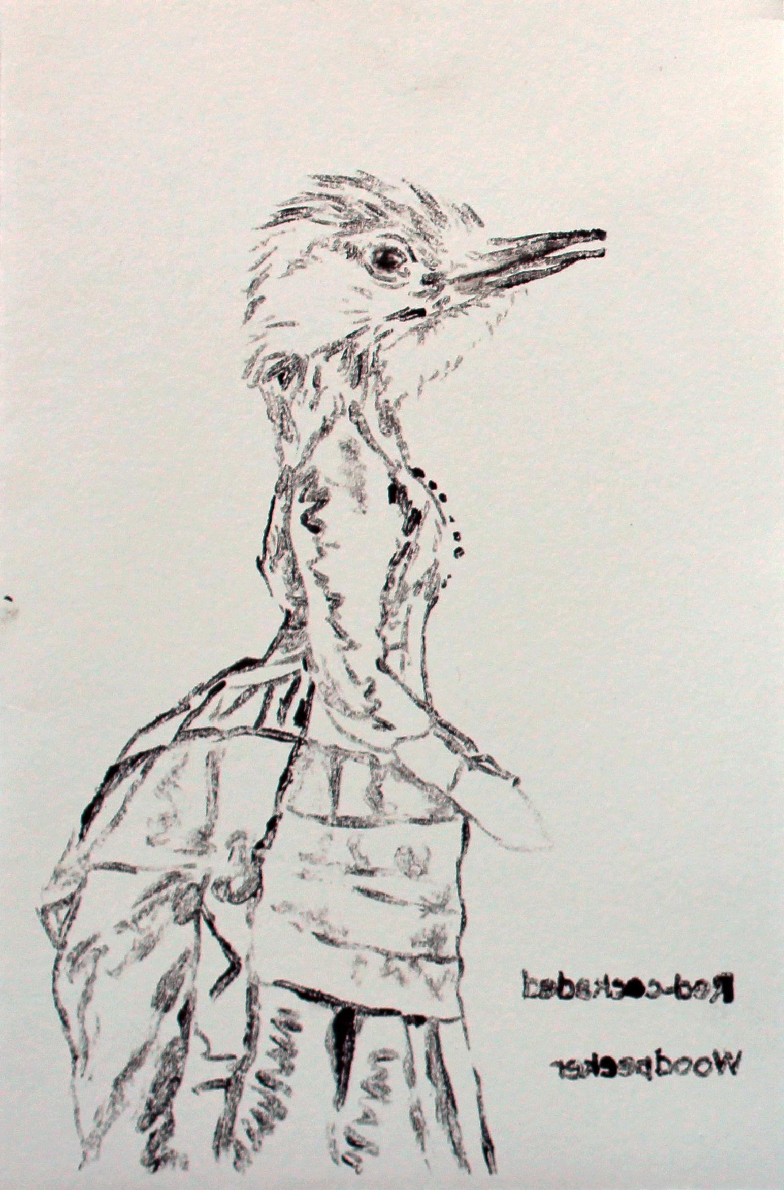 red-cockededwoodpecker.jpg