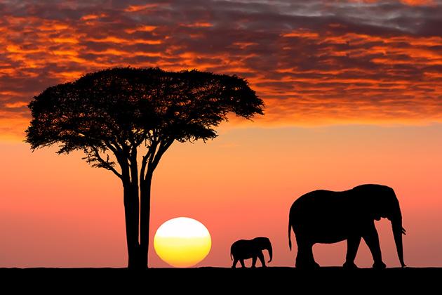 africa-cruise-safari.jpg